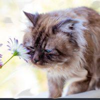 stock-photo-amazing-cat-on-the-nature-610343831